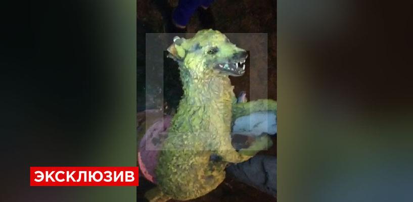 Омич изготовил для детей персонажа сказки из мертвой собаки