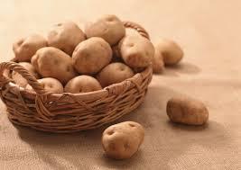 В Омской области картофель атаковали паразиты