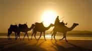 События недели в Омске: караван верблюдов и палестинские хакеры