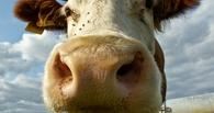 На открытии омской «Флоры» Двораковскому вручат корову