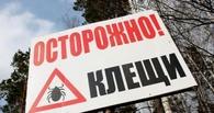 В Омской области клещи покусали почти две тысячи человек