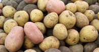 Денег осталось только на картошку: россияне стали экономить на всем