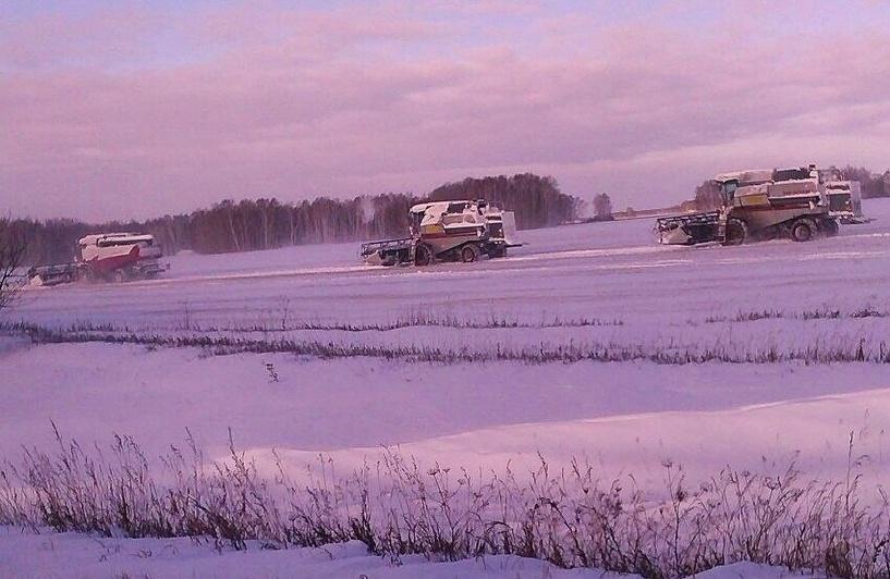 Все не так плохо: под снегом в Омской области осталось лишь 2% зерна