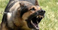 В Омской области двух школьников покусала собака