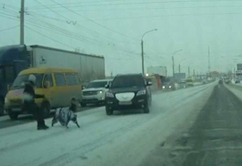 В Омске водитель внедорожника чуть не сбил женщину с собакой на пешеходном переходе