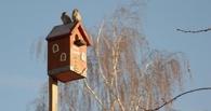 Омичи начинают строить скворечники для прилетающих с зимовки птиц