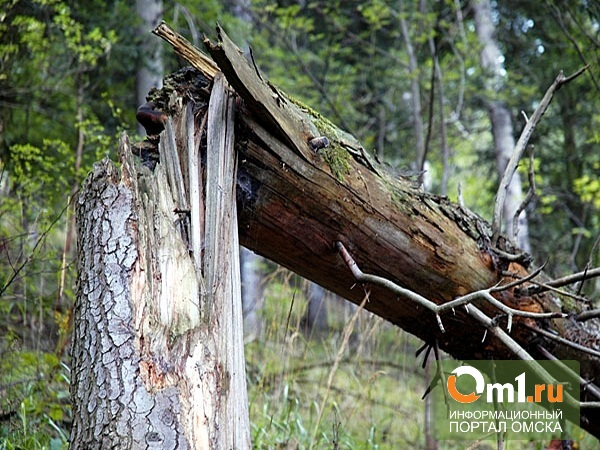 "На Дне города на ""Зеленом острове"" на омичку упала ветка дерева"