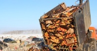 В Омск из Петербурга завезли 15 тонн яблок и раздавили бульдозером