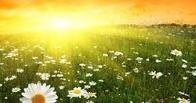 Синоптики пообещали омичам жару в июне