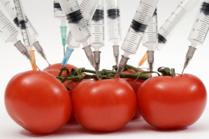 Правительство одобрило запрет на поставку генно-модифицированных продуктов в Россию