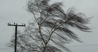 В Омске на детской площадке ветром завалило дерево