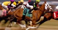 В Омске состоится Всероссийский конный фестиваль