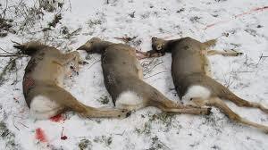 В Омске браконьеры за убийство трех косуль заплатят 220 тысяч рублей