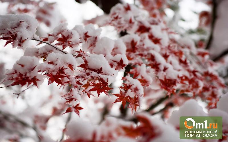 Первый в Омской области снег выпал в Таре