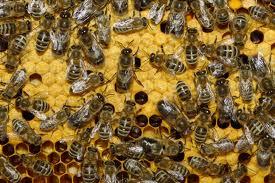 В Омской области сгорел омшаник с пчелами