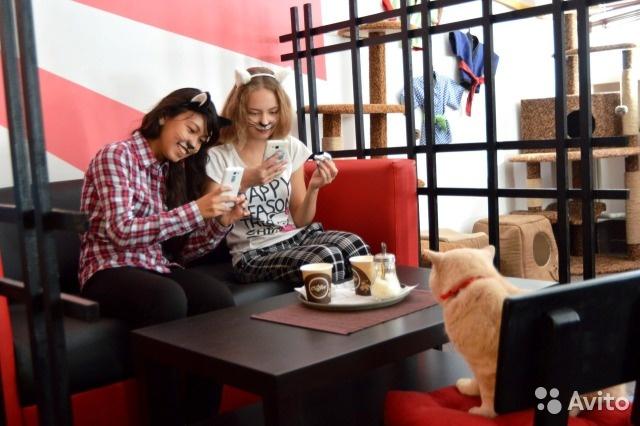 Владелец котокафе вОмске готов обменять его на строительные материалы