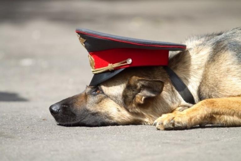 Служебная собака помогла вернуть украденный у омича телефон