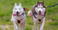 Выходные в Омске: лекция на балконе и гонки на собаках