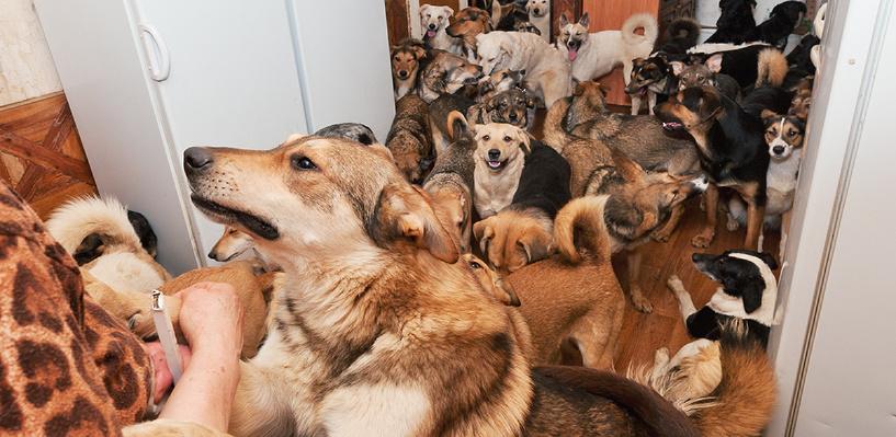 Омичка сняла квартиру и поселила туда 20 собак