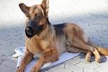 В Омске Антимеховой марш поддержали десять человек и собака