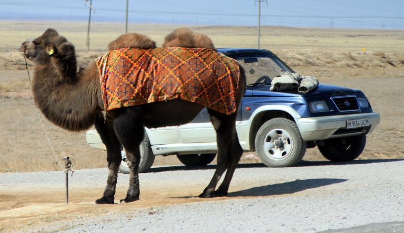 Великое казахское нашествие: соседи вывезли к себе 30 000 наших авто