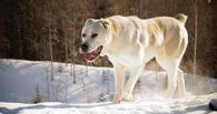 Омичка, на которую напали собаки, добилась компенсации в 80 000 рублей