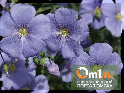 В Омской области из льна собираются изготавливать линолеум
