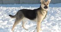 Омский приют «Друг» может «поплыть» от скопившегося снега
