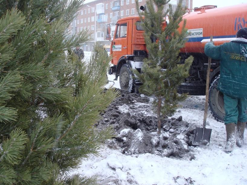Вместо 2000 снесенных аварийных деревьев в Омске хотят высадить около 5000 новых