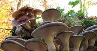 Заключенные из Омска вырастили в колонии урожай грибов
