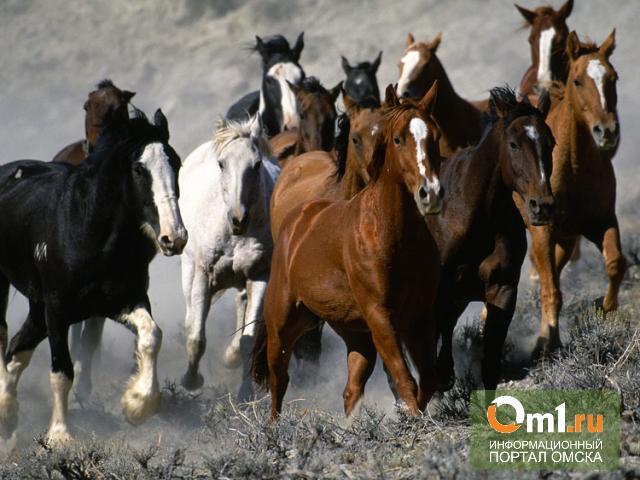 Из Омска в Казахстан пытались вывезти 63 лошадиные шкуры