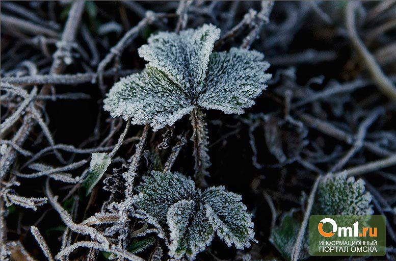 Выходные в Омской области пройдут с заморозками