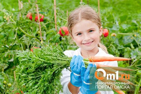 В Омске дачнику не понравились семена моркови «Зайка моя»