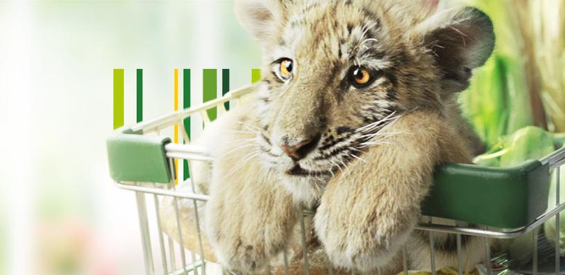 Россельхозбанк предлагает новый пакетный продукт – вклад «Амурский тигр» плюс карта