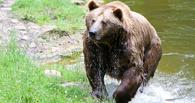 В Омской области медведи вышли к людям
