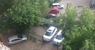В Омске из-за сильного ветра начали падать деревья