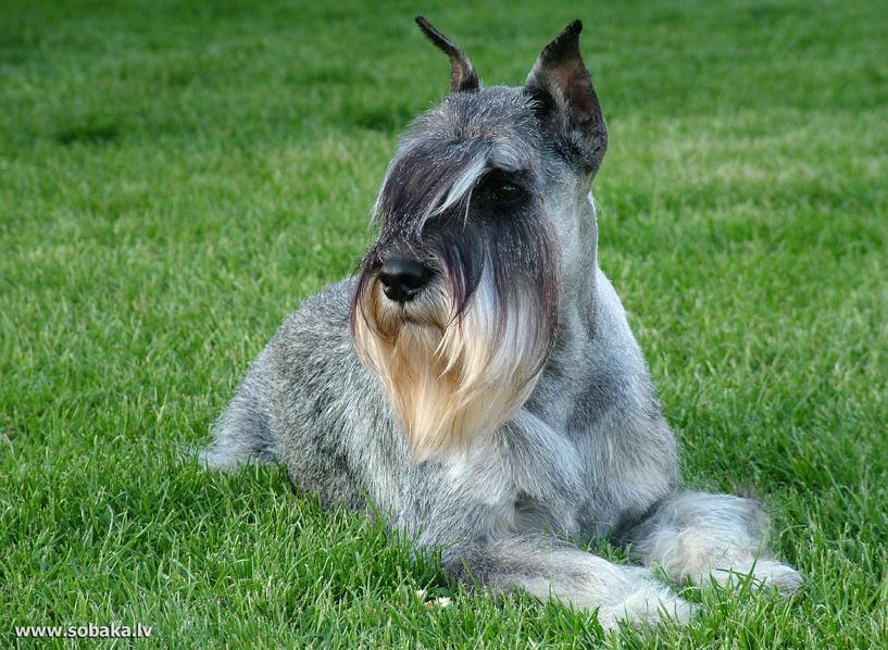 Слезы умиления: встреча собаки с хозяйкой после 2 лет разлуки растрогала весь Youtube