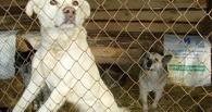 Омичи подписывают петицию против «лагеря смертников» для животных