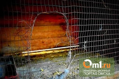 За гибель кота в омской ветклинике хозяйке заплатят 10 тыс рублей