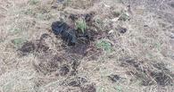 В Омске нашли скелет человека, которого убили 50 лет назад