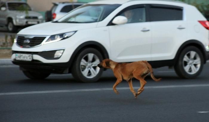 Спасая жизнь собаке, омский водитель погубил семью из трех человек