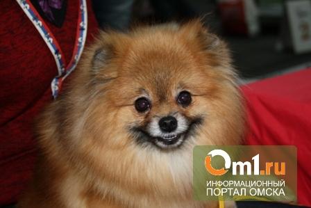 На выходных в Омске пройдет благотворительная выставка беспородных собак