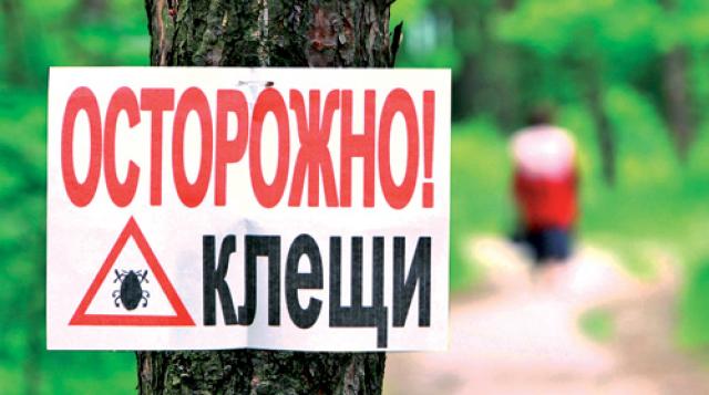 В Омской области зарегистрировано почти тысяча случаев укуса клещами