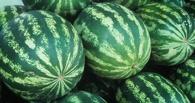 В Омск из Казахстана не пустили 80 тонн фруктов и овощей