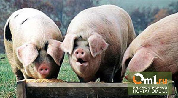 Главу «Омского бекона», велевшего работникам забить своих свиней, признали неправым