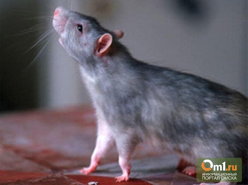 В Китае под видом баранины продавали освежеванных лис и крыс