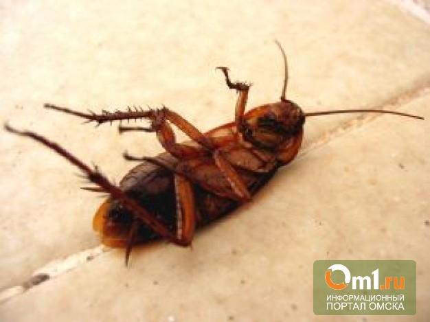 В Омске попытаются найти студенческую общагу без тараканов