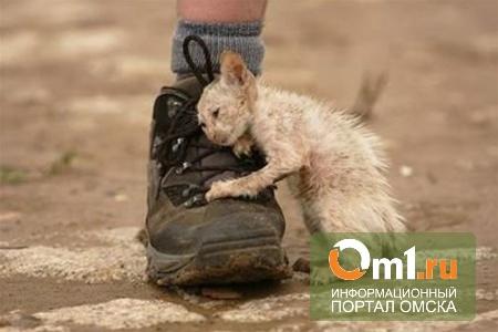 Омская мэрия заплатит за содержание бездомных животных около 4 миллионов