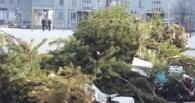 Половина новогодних елок омичам оказалась не нужна