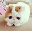 Разводим милашество: сегодня день котиков и мурчания